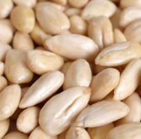 Almond Protein (Blanched)
